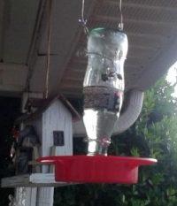 hummingbird feeder_thumbnail